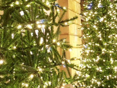Kalėdų eglutės spindesys
