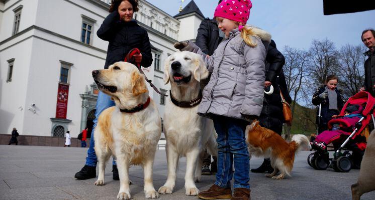 Retriveriai prie valdovu rumu ekskursijos su sunimis