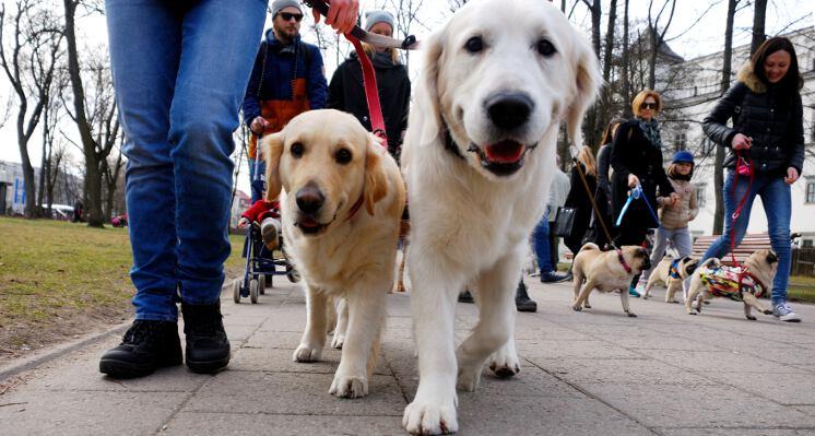 Retriveriai ekskursijos su sunimis