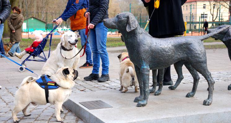 Lietuviski skalikai ir mopsai ekskursijos su sunimis
