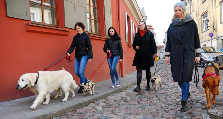 Sunys spalvingomis senamiesco gatvemis ekskursija su sunimi