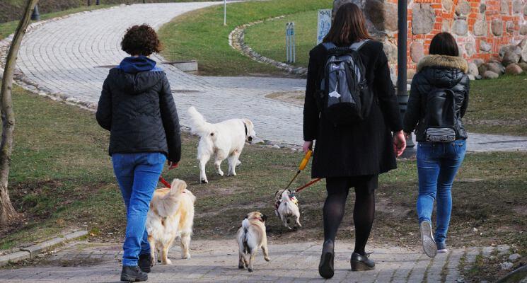 Ekskursija jau baigiasi ekskursija su sunimi