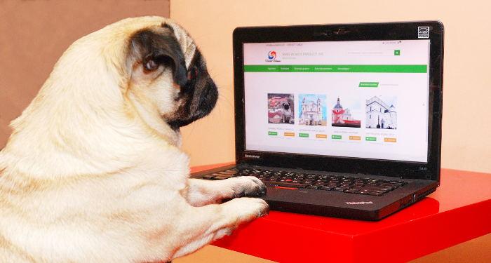Mopsas prieš kompiuterio ekraną, skatinantis pirkti internetu