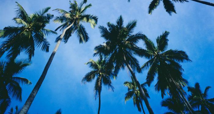 Kaip Palmių sekmadienis tapo Verbų sekmadieniu?