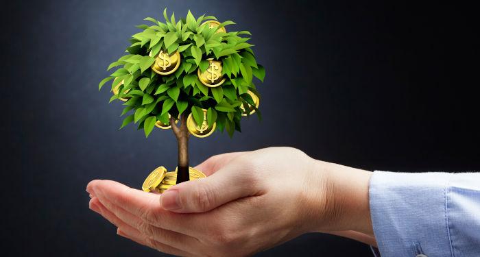 Medis, augantis ant monetų